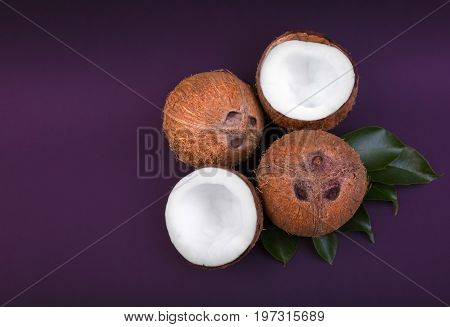 A composition of whole and cracked fresh coconuts with green leaves on a purple background. Healthy exotic fruits. Hawaiian coconuts. Tasty tropical coconuts. Ingredients for gourmets.