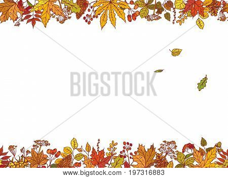 Vector colourful outline background sketch autumn leaves, cones, dried flowers and berries. Seamless borders with herbal graphics and place for text about sale or holiday congratulations.