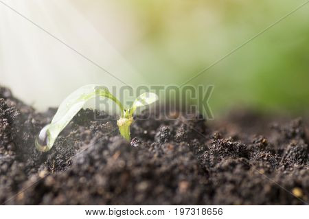 small tree grow up with sunshine concept in save world Energy and environment conservation