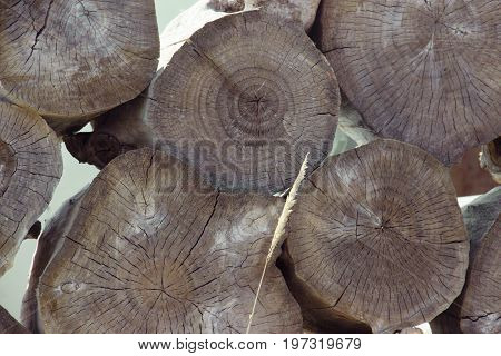 Stacked tree wood logs background. Abstract photo of a pile of natural wooden logs background, top view. Pieces of round teak wood.