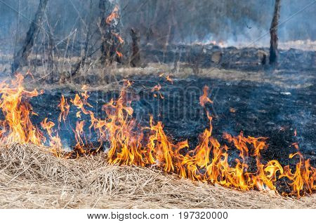 The Front Line Of The Spreading Forest Fire