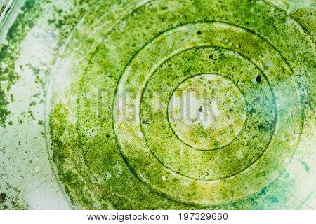 Green Wet Moist Moss In The Bottom Of Water Bin Surface. Nature Background.