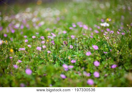 View of various countryside flowers and grass