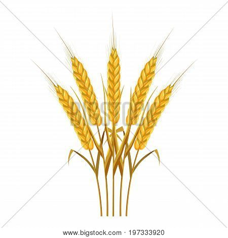 Five wheat ears icon. Cartoon illustration of wheat ears vector icon for web design
