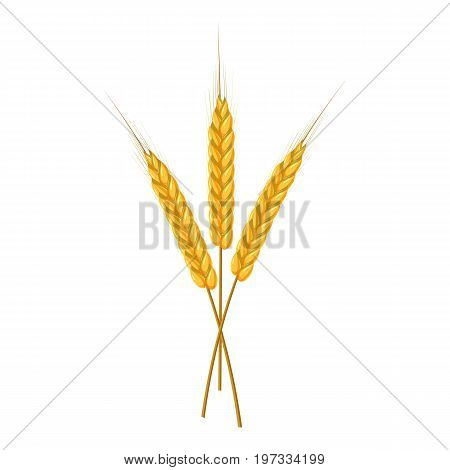 Three ripe ears wheat icon. Cartoon illustration of wheat ears vector icon for web design