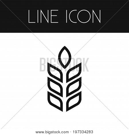 Barley Vector Element Can Be Used For Barley, Spike, Sheaf Design Concept.  Isolated Spike Outline.