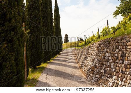 View of Cypress and stone wall Fagagna. Italy