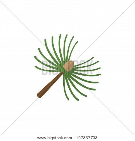 Rosemary Vector Element Can Be Used For Rosemary, Spruce, Leaves Design Concept.  Isolated Spruce Leaves Flat Icon.