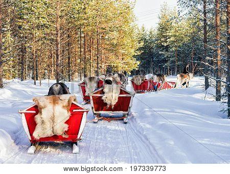 Reindeer Sleigh Caravan Safari And People Forest Lapland Northern Finland
