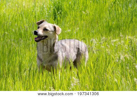 Funny puppy is waiting his command at green grass