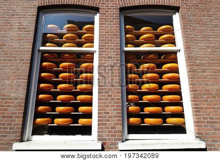 Yellow cheese display placed on wooden shelves stacked behind glass of high window and brick wall inside store in delft Holland.