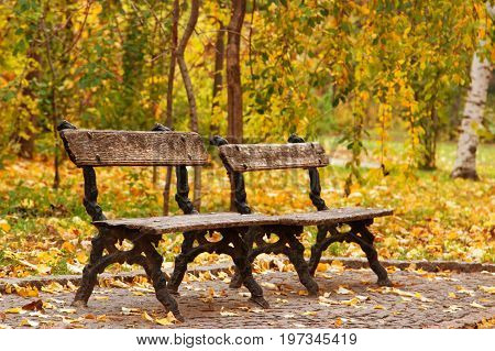 Two empty autumn benches in park outdoor