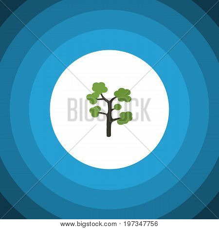 Garden Vector Element Can Be Used For Evergreen, Tree, Timber Design Concept.  Isolated Evergreen Flat Icon.