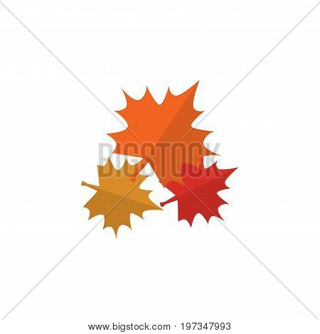 Canadian Vector Element Can Be Used For Canadian, Maple, Leaf Design Concept.  Isolated Maple Leaf Flat Icon.