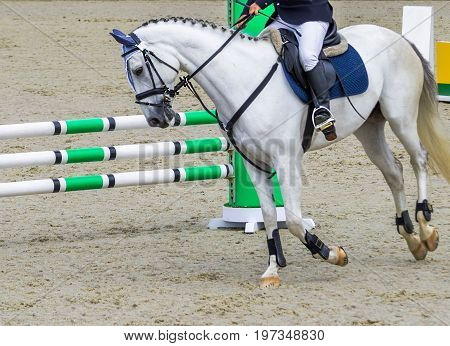 Dressage horse and rider. White horse portrait during dressage competition. Rider with white horse during equestrian showjumping. Bright sunny day.