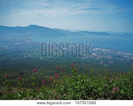view on Naples bay from Vesuvius saddle with pink blooming flowers