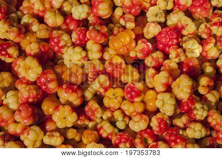 Background cloudberries in macro, vibrant colors in summer