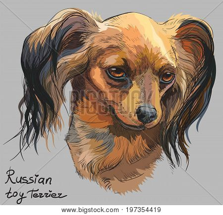 Vector colorful outline portrait of Russian long-haired toy Terrier hand drawing Illustration on grey background