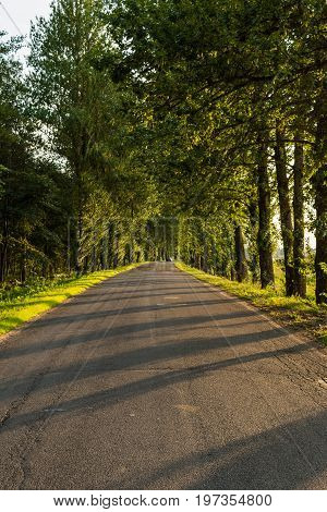 Asphalted Rural Road Without Road Marking, Tall Trees Grow On The Roadside