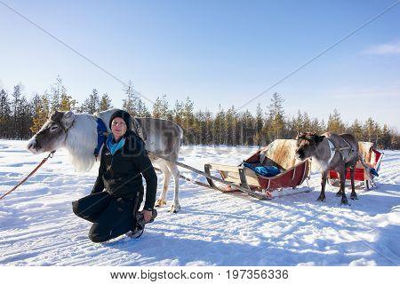 Girl At Reindeer Sled Caravan Forest Lapland Northern Finland