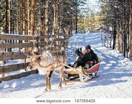 Family While Reindeer Sledge Ride At Winter Rovaniemi Northern Finland