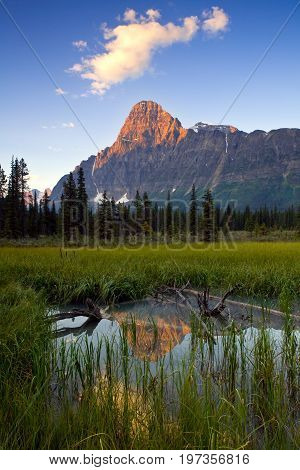 Sunrise and reflection of Mount Chephren, Banff, National Park, Alberta, Canada