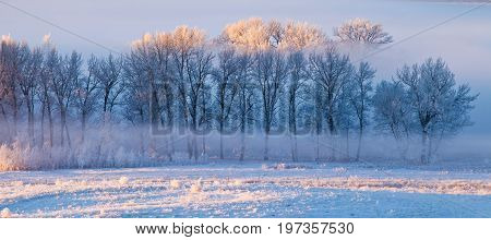 Hoarfrost covered trees in early morning light on a cold winter day in Calgary, Canada