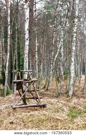 Watchtower In Autumn Forest In Latvia Baltic