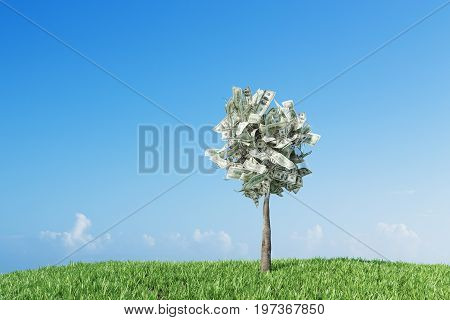 Small dollar tree is growing in a meadow with cut grass. Windy weather. Concept of money investment and an income growth. Toned image mock up