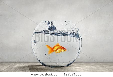 Goldfish jumping from aquarium