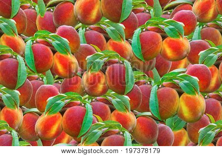 Ripe Peach Seamless Texture Background