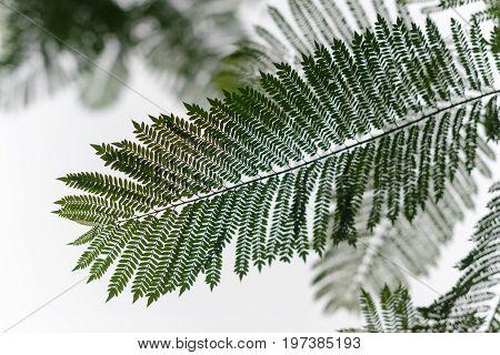 Silhouette Of Tree Fern Against White Sky