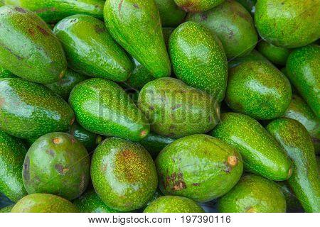 Avocado (persea Americana) Super Fruit Healthy Food With Important Nutrients.