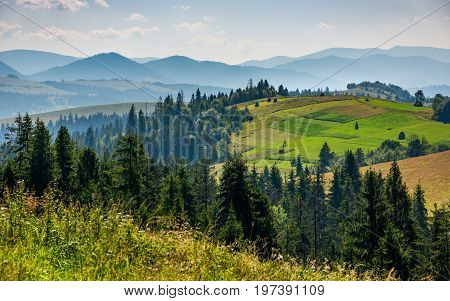 forest in mountain rural area. green agricultural field on a hillside. beautiful summer scenery in pleasant weather