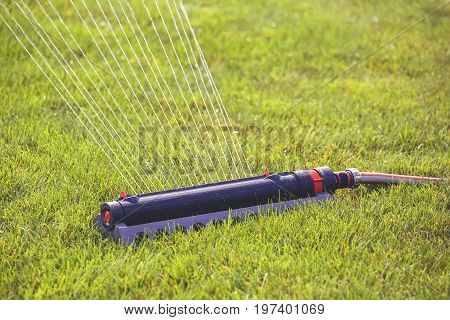 Lawn Sprinkler In Action, Watering Grass 5
