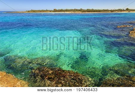 Summer seascape,Apulia coast: Nature Reserve of Torre Guaceto. Carovigno (Brindisi) -ITALY- Mediterranean maquis: a nature sanctuary between the land and the cystalline sea.