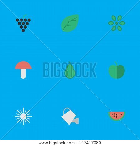 Elements Fruit, Bailer, Sheet And Other Synonyms Berry, Paper And Flower.  Vector Illustration Set Of Simple Gardening Icons.