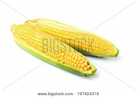 Two fresh corn cobs isolated on a white background.