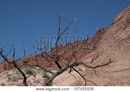 This image was taken in the red rock mountains of Nevada