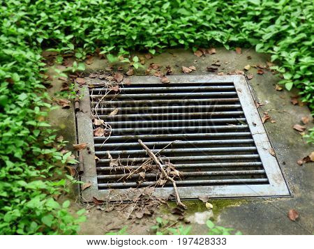 Draining hole surrounded by grass. Water Outflow. Raining hole
