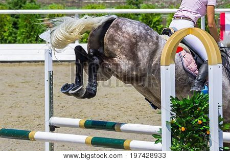 Beautiful girl on gray horse in jumping show, equestrian sports. Dappled gray horse and girl in pink shirt over a jump. Hot, shiny day.