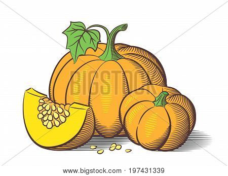 Stylized image of pumpkins. Big pumpkin small pumpkin and pumkin slice with seeds