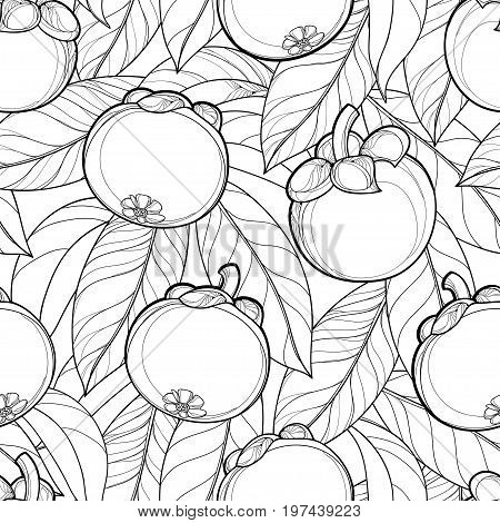 Vector seamless pattern with outline Mangosteen or Garcinia mangosteen fruit and leaf on the white background. Fruit pattern with tropical plant in contour style for summer design and coloring book.