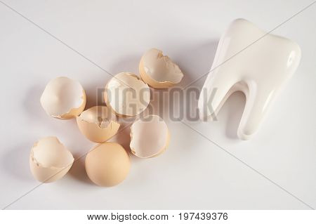 White healthy human tooth model and eggshell isolated on white background with copy space. Concept of healthy nutrition for strengthening teeth