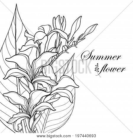 Vector bouquet with outline Canna lily or Canna. Flower, bud and leaf isolated on white background. Floral corner composition in contour style with ornate flower for summer design and coloring book.