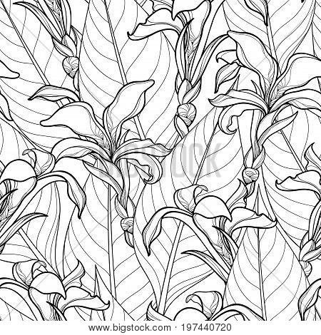 Vector seamless pattern with ornate Canna lily or Canna flower and leaves on the white background. Floral pattern in contour style with outline flower for tropical summer design and coloring book.