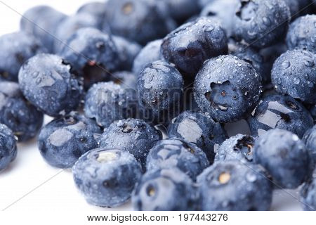 Ripe and juicy fresh picked blueberries closeup