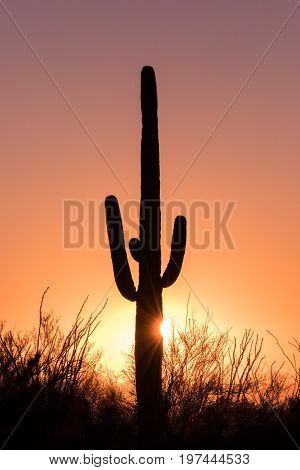a saguaro cactus silhouetted at sunset in the Arizona desert