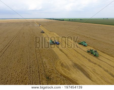 Harvesting Wheat Harvester. Agricultural Machines Harvest Grain On The Field.