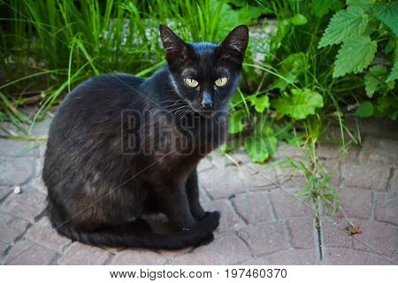 Severe street cat. Looks at the camera with a grain of salt